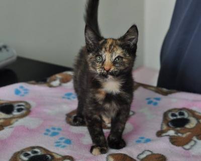 Bridget – Adopted