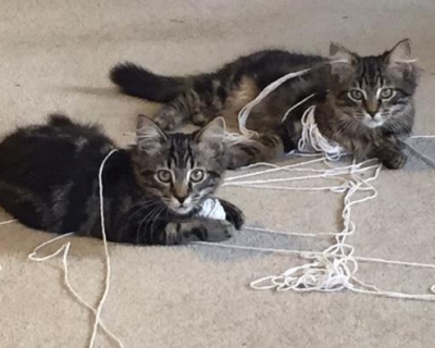Timmy & Jimmy – Adopted