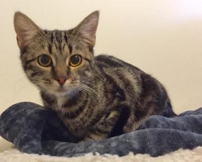 Tara – Adopted