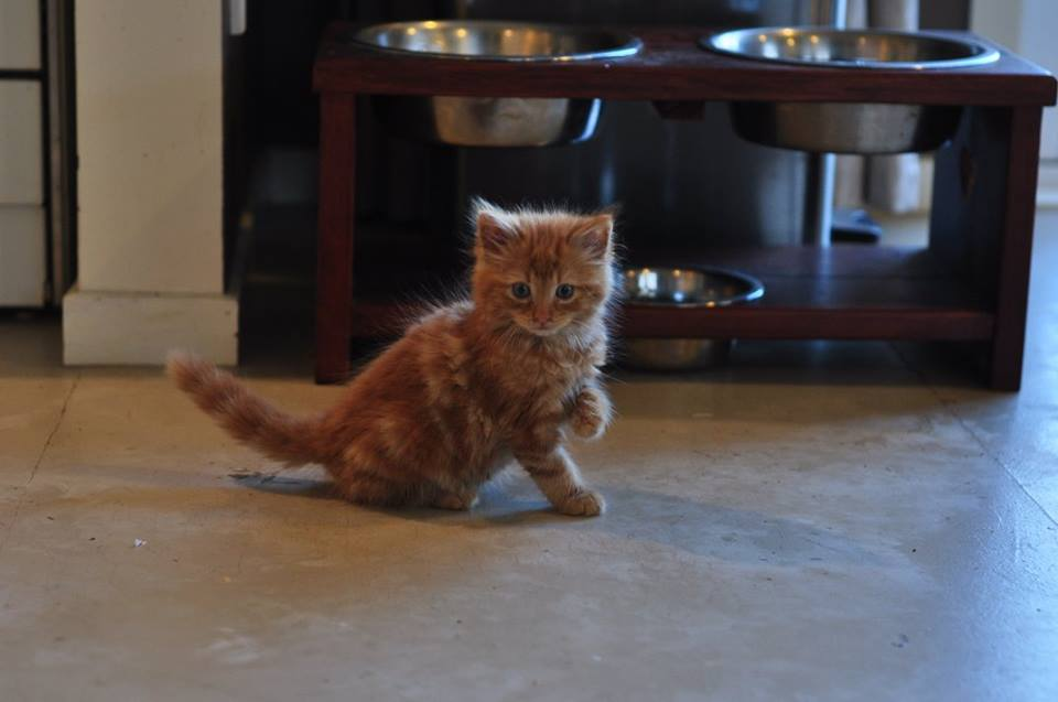 Henry – Adopted
