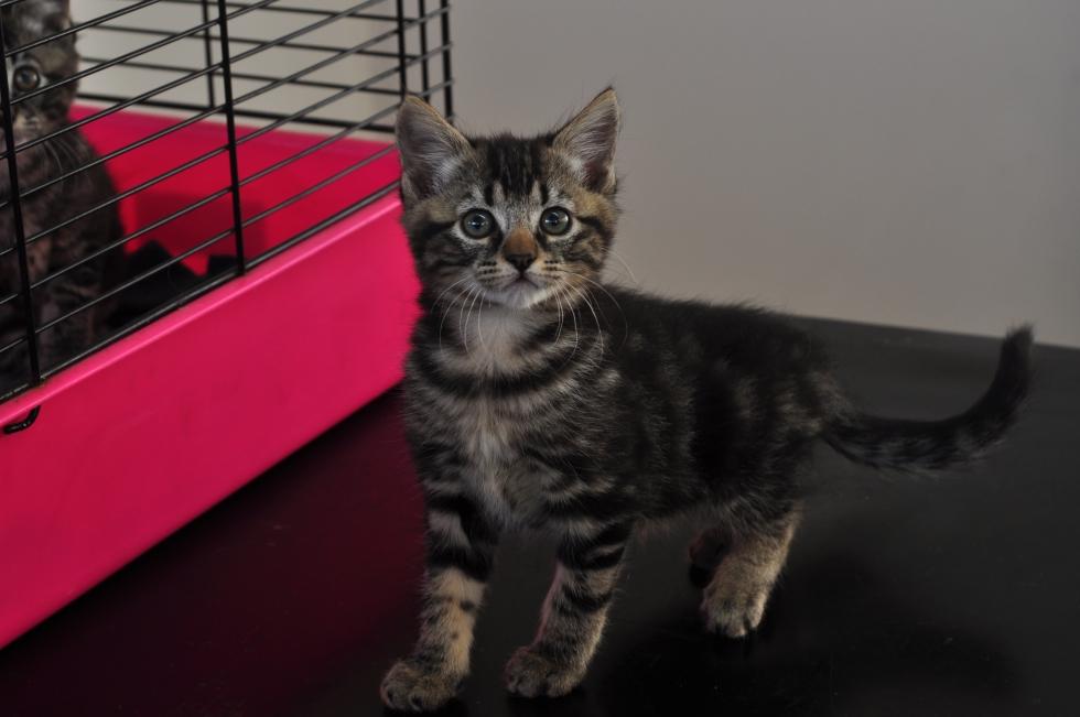 Kate – Adopted