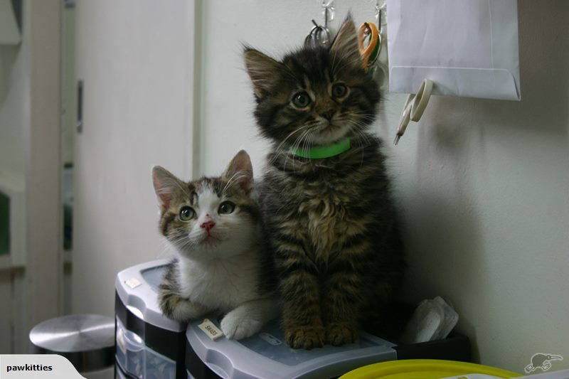 Mister and Judas – Adopted