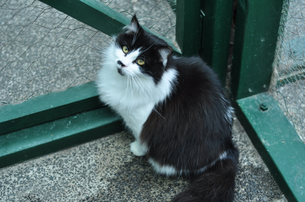 Fluffy – Adopted