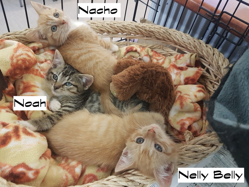 Nellybelly – Adopted