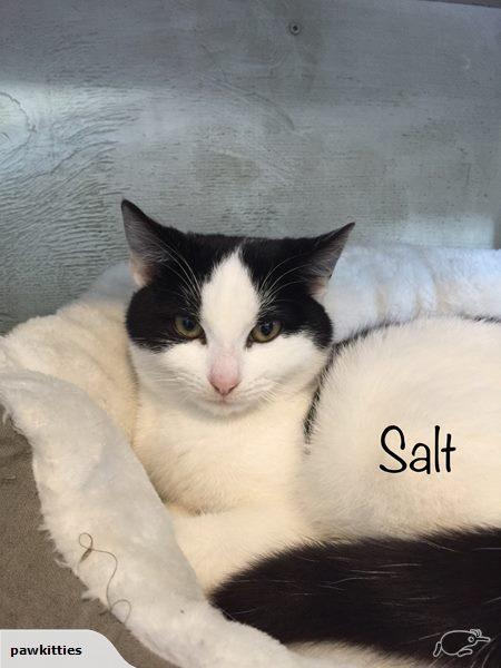 Salt – Adopted