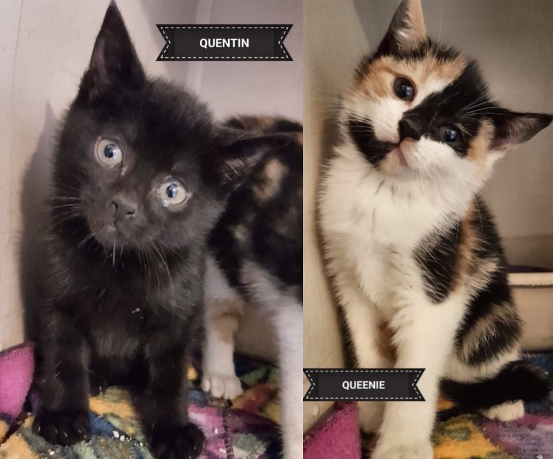 Queenie and Quentin – Adopted