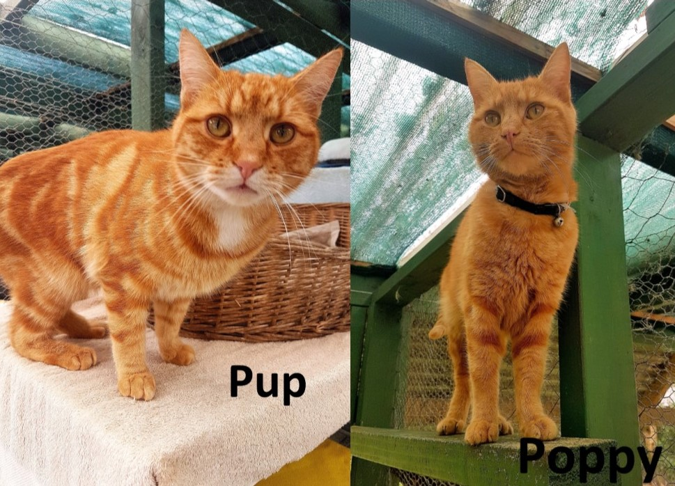 Pup & Poppy – Adopted