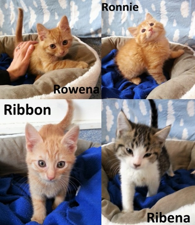 R Litter – Adopted