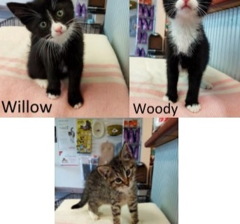 W Litter – Adopted