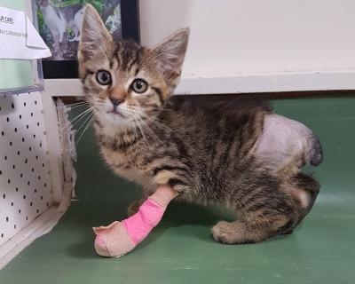 Stubbs – Poor Abused Kitten! – Adopted