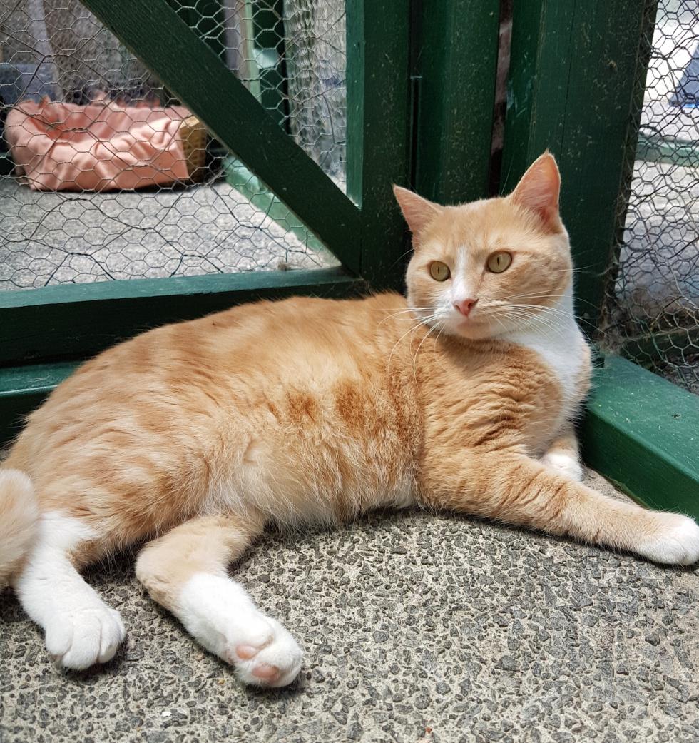 George – Adopted