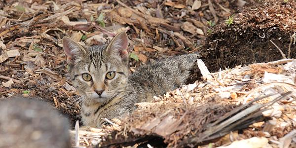 Contact PAW Kitties