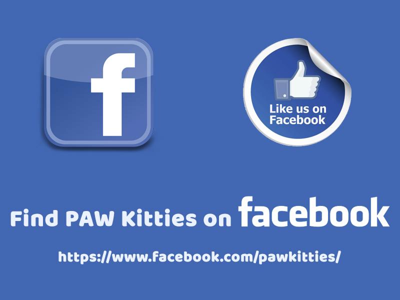 Find PAW Kitties on Facebook