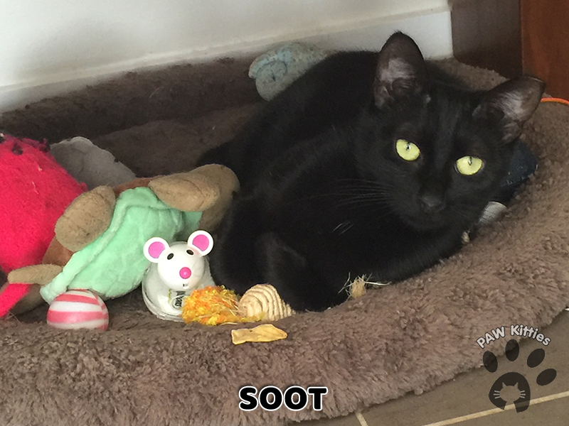 Soot – Adopted