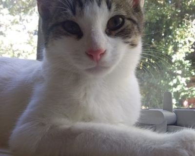 Sprat – Adopted