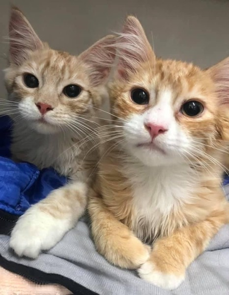 Umbie & Uno – Adopted
