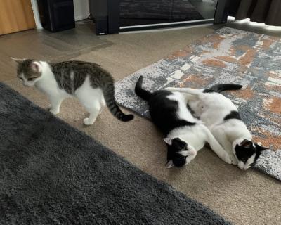 "The ""A"" team – Anka, Axel & Athena – Adopted"