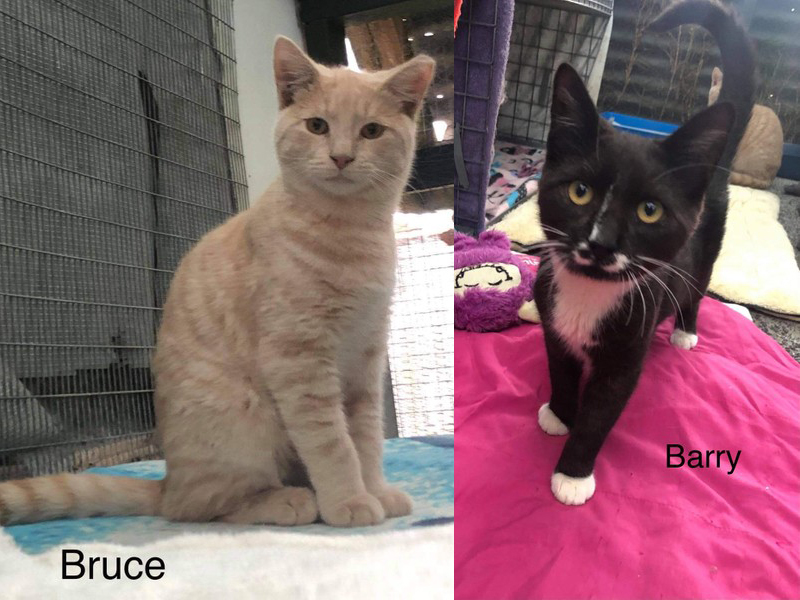 Bruce and Barry – Adopted